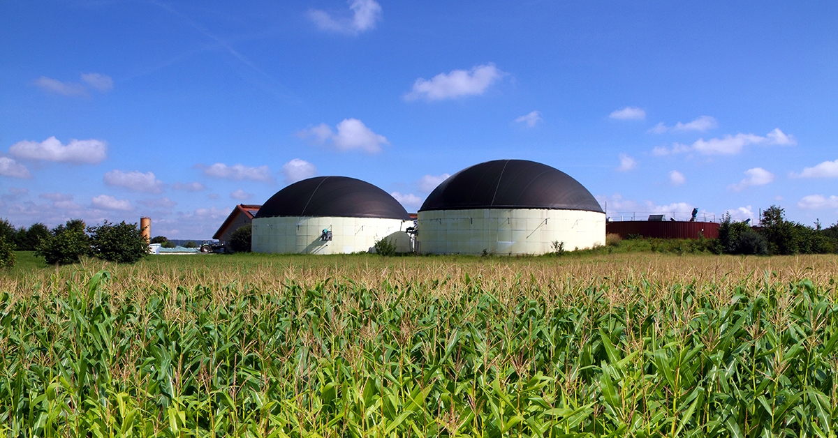 Biogas plant in a maize field